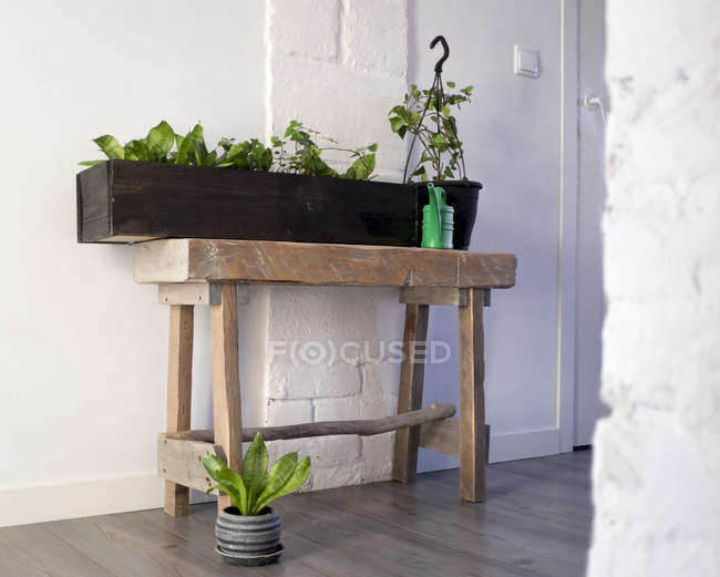 Potted plants arrangement in hallway of home — Stock Photo