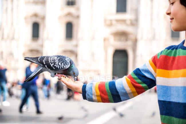 Хлопчик годування голубів руку в квадрат, Мілан, Ломбардія, Італія — стокове фото