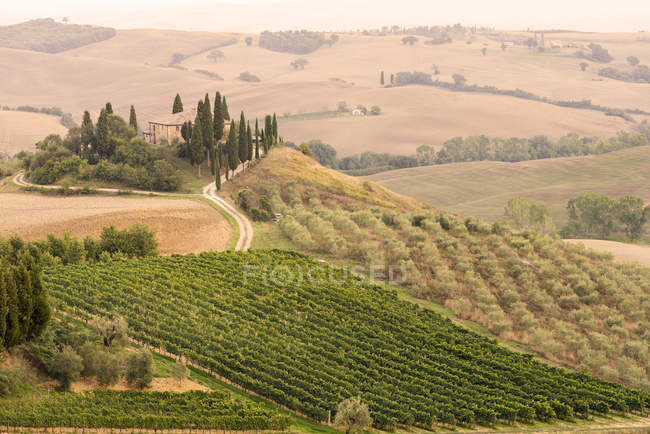 Rolling landscape with vineyard and farmhouse, Tuscany, Italy — Stock Photo