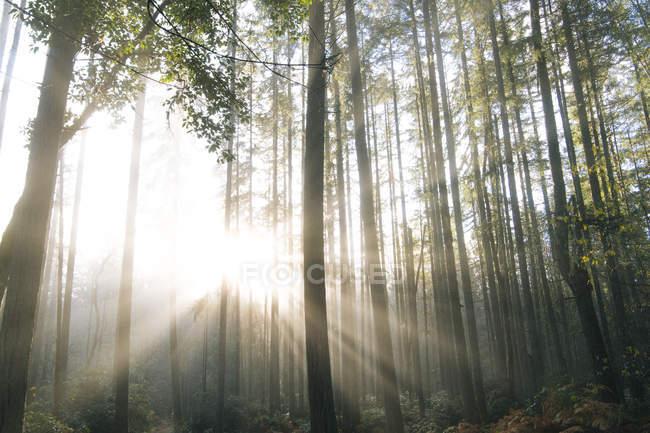 Luz do sol brilhando através de árvores na floresta, Bainbridge, Washington, EUA — Fotografia de Stock