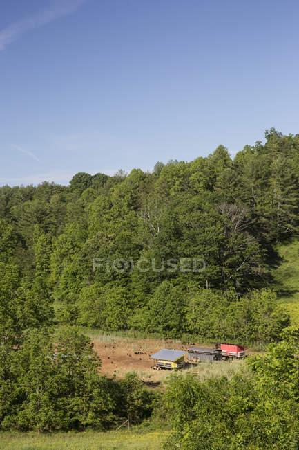 Paisagem de campo de galinheiros na fazenda orgânica ao ar livre — Fotografia de Stock