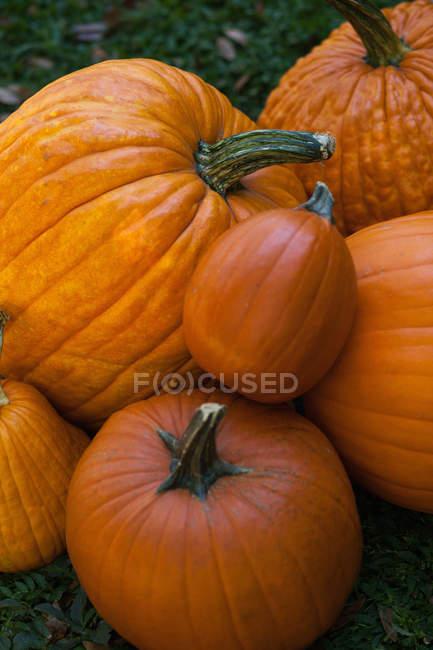 Pila de maduros calabazas naranja frescas, vista primer plano - foto de stock