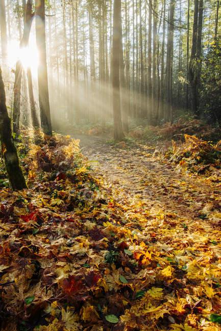 Sunlight in autumn forest, Bainbridge, Washington, United States — Stock Photo