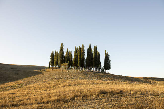 Rolling landscape with cypress trees on hill, Tuscany, Italy — Stock Photo