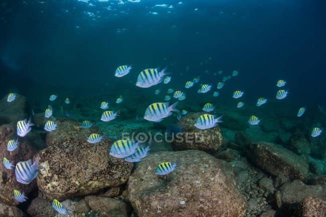 Poissons dans l'océan, Isla Espiritu Santo, La Paz, Basse Californie Sur, Mexique — Photo de stock