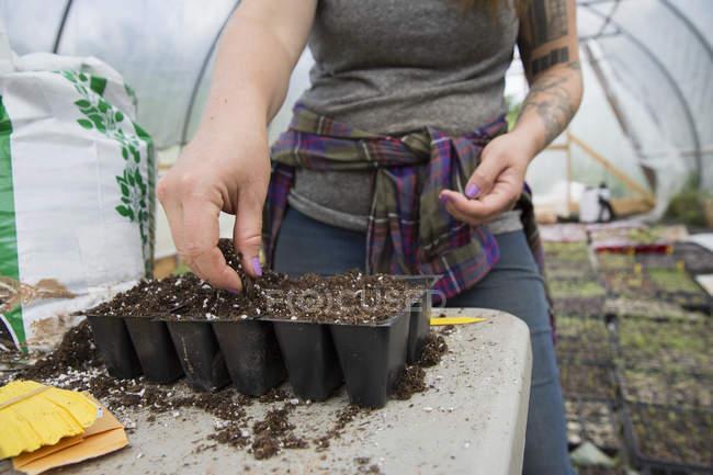 Recadrée vue de planter des graines de melon d'eau dans les bacs de la graine de femme — Photo de stock