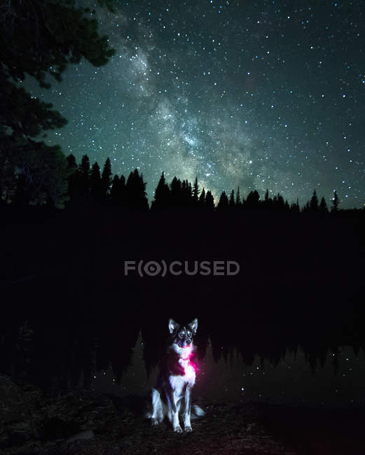 Portrait of dog against Milky Way Galaxy, Nickel Plate Provincial Park, Penticton, British Columbia, Canada — Stock Photo