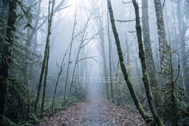 Pathway through forest, Bainbridge, Washington, USA — Stock Photo