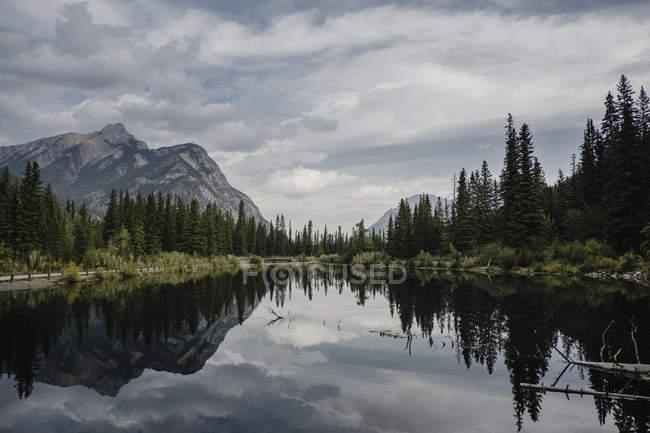 Відображення гірські і дерева в озеро, місті Canmore, Канада, Північна Америка — стокове фото