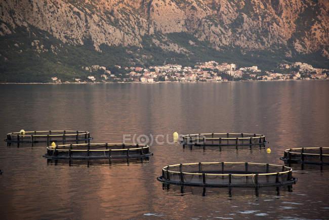 Filets de pêche cage circulaire sur l'eau, Kotor, Montenegro, Europe — Photo de stock