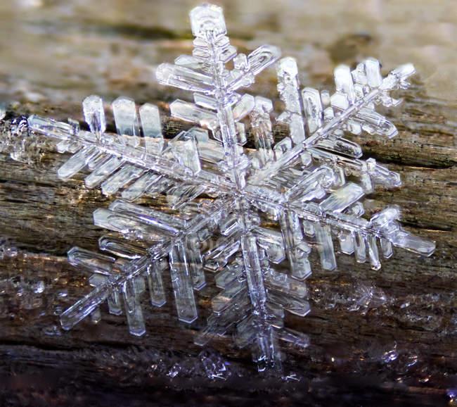 Cristal congelado sextavado formado da geada do Hoar — Fotografia de Stock