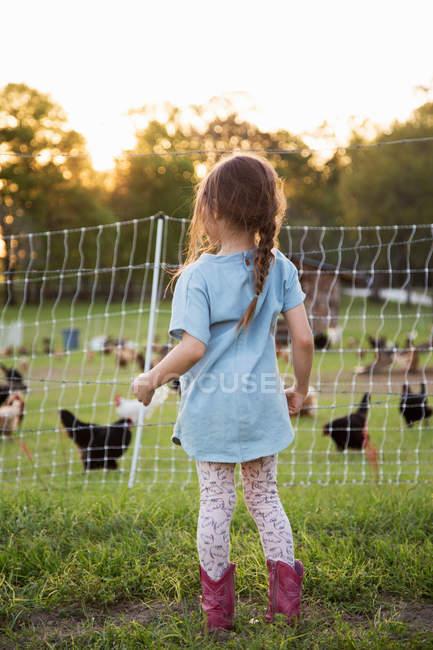 Молодая девушка на ферме, смотрит на кур через проволочный забор, вид сзади — стоковое фото