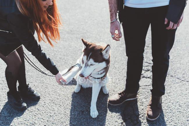 Vista ritagliata di coppia che gioca con il cane — Foto stock