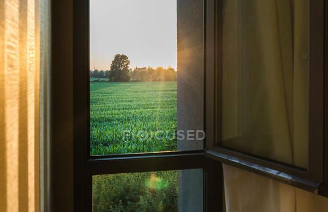 Blick auf grünen Rasen vom Fenster des Hauses — Stockfoto