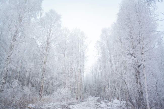 Forêt enneigée, Oural, Sverdlovsk, Russie — Photo de stock