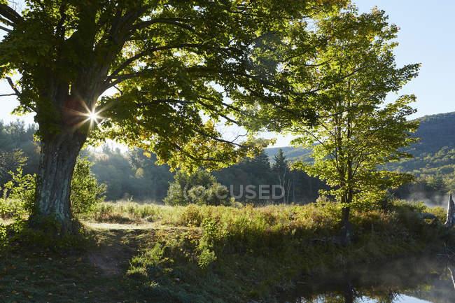 Vista panoramica di Colgate Lake Wild Forest, Catskill Park, Stato di New York, Stati Uniti — Foto stock