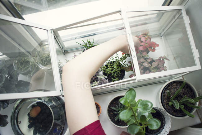 Arm of young woman removing potted plant from windowsill terrarium — Stock Photo