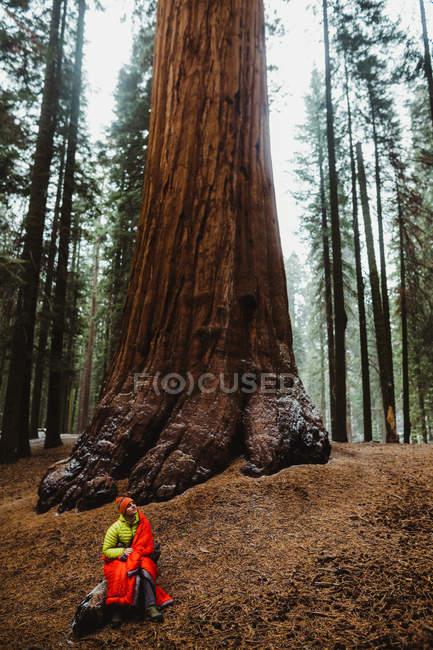 Jovem caminhante do sexo masculino envolto em saco de dormir vermelho olhando para a sequoia, Sequoia National Park, Califórnia, EUA — Fotografia de Stock