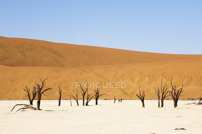 Dead Trees, Deadvlei, Sossusvlei, Namib Naukluft Park, Namib Desert, Namibia — Stock Photo