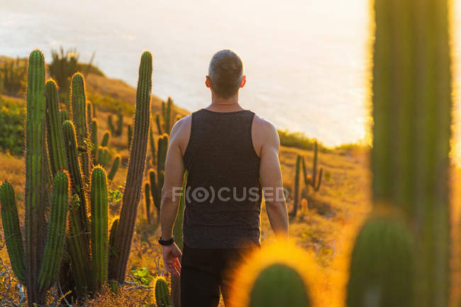Rear view of man looking at view by cacti, Jericoacoara National Park, Ceara, Brazil — Stock Photo