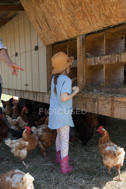 Young girl on farm, collecting eggs from chicken coop — Stock Photo