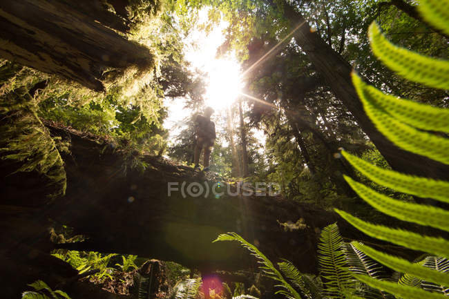 Low angle view of Teenage boy standing on fallen tree — Stock Photo