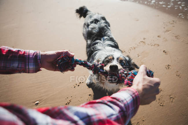 Man and dog playing with rope on beach, personal perspective — Stock Photo