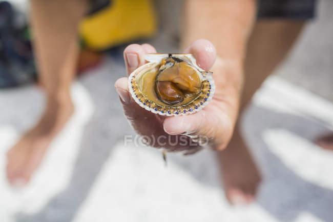 Человек со свежепойманным гребешком — стоковое фото