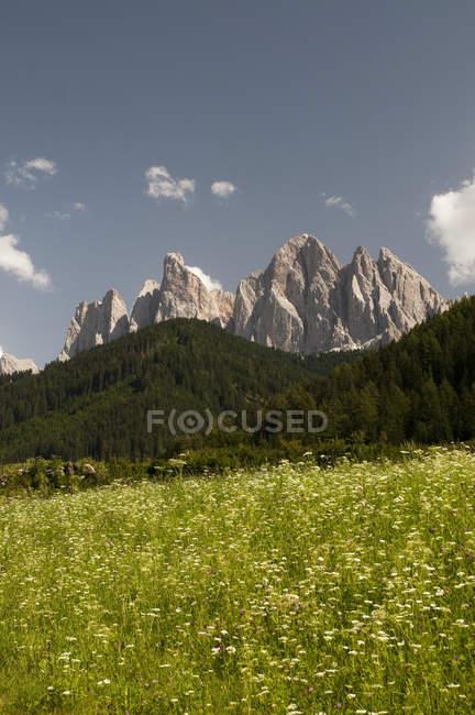 Wildflower луг та Odle гори skyline, місті Funes долини, Доломітові Альпи, Італія — стокове фото