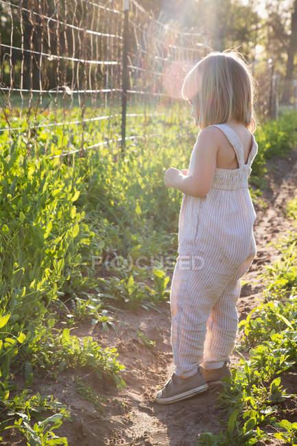 Молодая девушка на ферме, смотрит через проволочный забор — стоковое фото