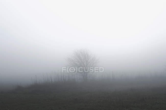 Rural scene with tree in mist, Houghton-le-Spring, Sunderland, UK — Stock Photo