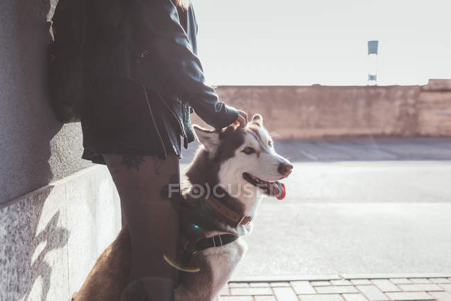 Cropped view of woman with dog outdoor — Stock Photo