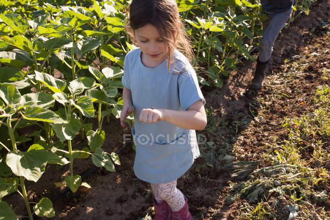 Молодая девушка ходит по ферме, глядя на божью коровку под рукой — стоковое фото