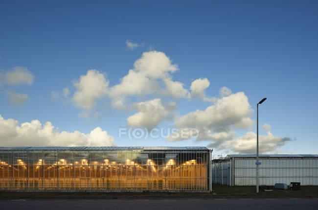 Invernadero iluminado por luces Led, Países Bajos - foto de stock
