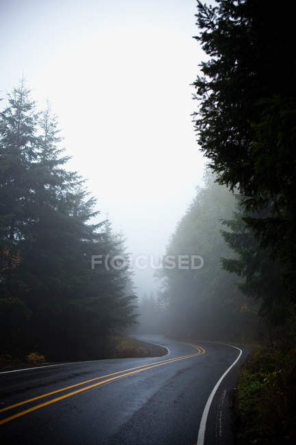 Empty rural road with trees in mist — Stock Photo