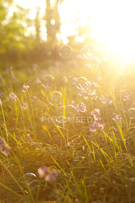 Soap bubbles floating in meadow with back light — Stock Photo