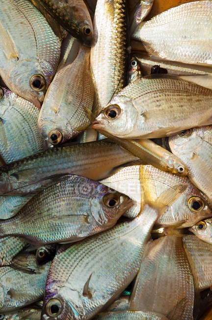 Mercato del pesce in vendita su pesce di mattina, Baia del Bengala, Tamil Nadu — Foto stock