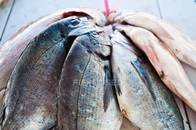 Nahaufnahme von Fisch hängen zum Trocknen — Stockfoto