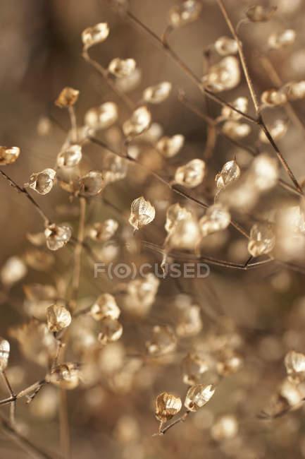 Primer plano de hojas secas y flores en el arbusto - foto de stock
