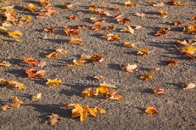 Высокий угол обзора осенних листьев на земле — стоковое фото