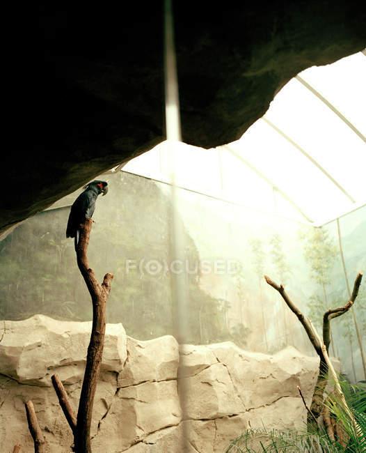 Вид одного попугая на ветке в зоопарке — стоковое фото