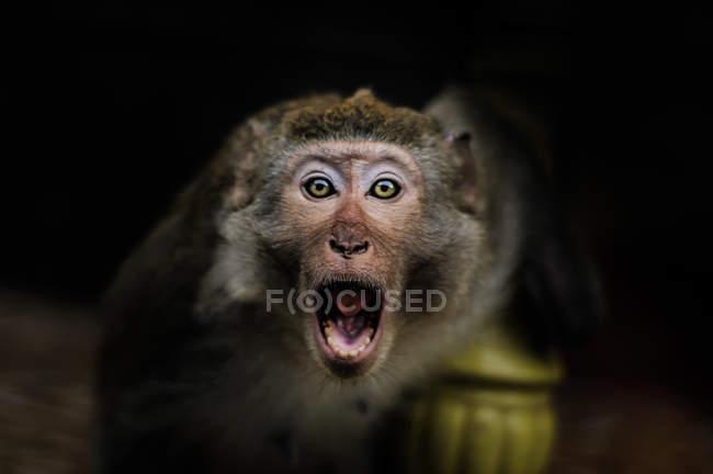 Мавпа мавпи острів, Ha Long Bay, В'єтнам — стокове фото