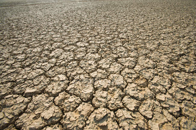 Cracked ground in Northern Cape, South Africa — Stock Photo
