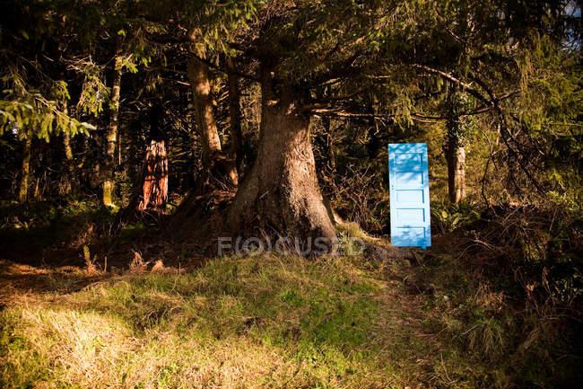Porte bleue peinte (portail) en forêt avec de grands arbres — Photo de stock