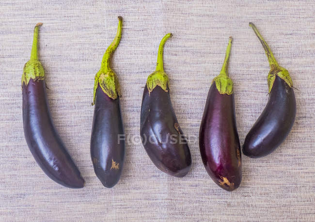 Top view of ripe aubergines in row on beige surface — Stock Photo