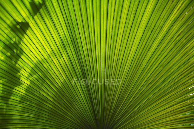 Sonnenlicht und Schatten auf grünen Palmen Baum Blatt, Nahaufnahme — Stockfoto