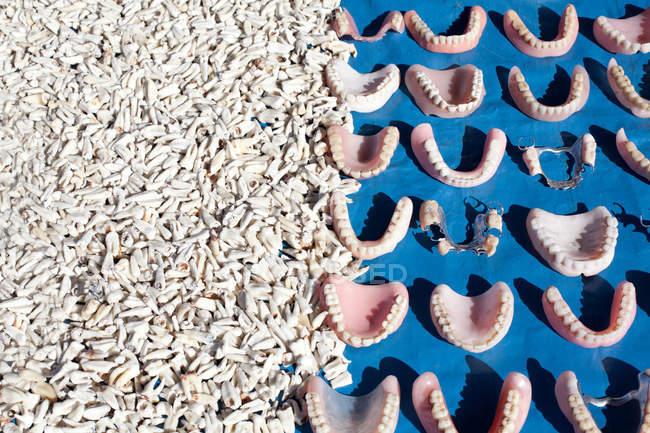 False teeth and real human teeth — Stock Photo