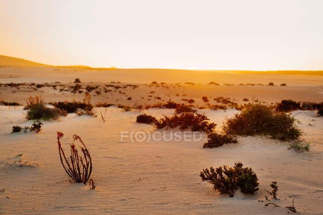 Сенді краєвид, Корралехо Фуертевентура, Канарські острови — стокове фото