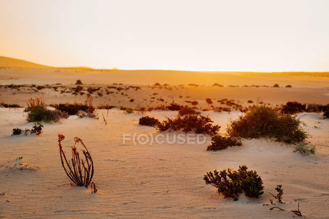 Сэнди пейзаж, Корралехо Фуэртевентура, Канарские острова — стоковое фото