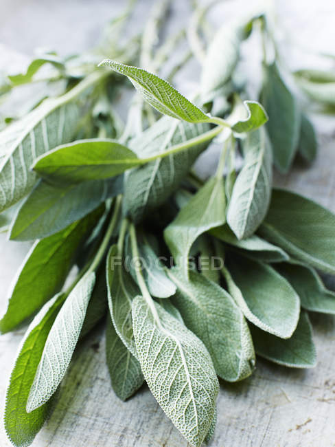 Green Sage leaves and twigs on wooden tabletop — Stock Photo